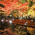 曽木公園の写真_102313