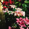 京都府立植物園の写真_108768