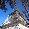 小倉城の写真_123048