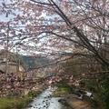 京王高尾山温泉 極楽湯の写真_127281
