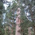 出羽三山神社の写真_135598