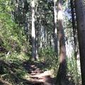 御岳山の写真_140270