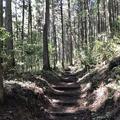 御岳山の写真_140273