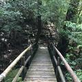 屋久島自然休養林(ヤクスギランド)の写真_152098
