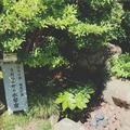 旧今井家住宅・美濃史料館の写真_153809