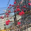 目黒天空庭園の写真_163299