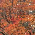 室生寺の写真_170221