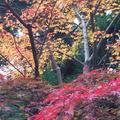 室生寺の写真_170222