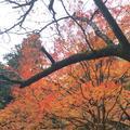 室生寺の写真_170224
