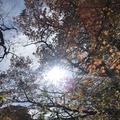 マゼノ渓谷の写真_173043