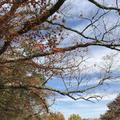 マゼノ渓谷の写真_173044