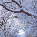 雲仙ロープウェイの写真_174629