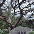 玉泉洞の写真_177550