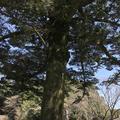 霧島神宮の写真_184801