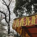 上野東照宮の写真_185969