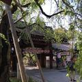 平野神社の写真_189385