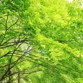 今熊野観音寺の写真_190493
