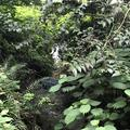 智光山公園前山池の写真_204406