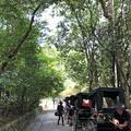 嵯峨野 竹林の道の写真_214644