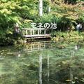 モネの池の写真_217969