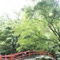 露天風呂の写真_223046