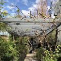 GARDEN HOUSE(ガーデンハウス)の写真_230162