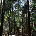 円山公園の写真_232764