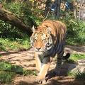 円山動物園の写真_232776
