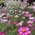 鳥取県立フラワーパークとっとり花回廊の写真_234866