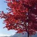 榛名湖の写真_237164