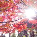 蓮華寺の写真_241248