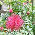 松江イングリッシュガーデンの写真_250526