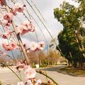 大阪城の写真_258628
