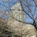 マンダリンオリエンタル東京の写真_265543