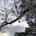 小田原城の写真_266137