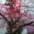 小田原城の写真_266194