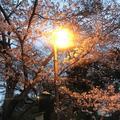 小田原城の写真_266195