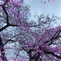 小田原城の写真_266197
