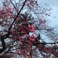 小田原城の写真_266198