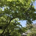 円覚寺の写真_270755
