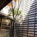 お茶屋文化館の写真_270914