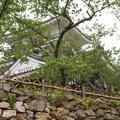 浜松城の写真_273298