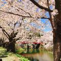 弘前公園の写真_273993