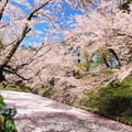 弘前公園の写真_273995