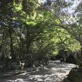 鎌倉文学館の写真_274641