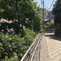 稲付城跡の写真_281216