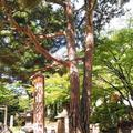 四柱神社の写真_286085
