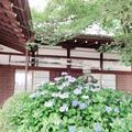 藤森神社の写真_290341
