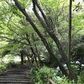 鎌倉文学館の写真_291270