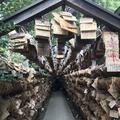 氷川神社の写真_321337